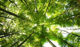 Socotec - Certification International urges organisations to prove green credentials